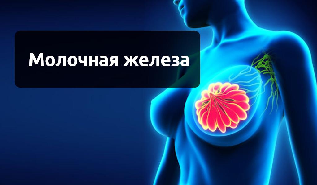 Общая информация про рак молочной железы